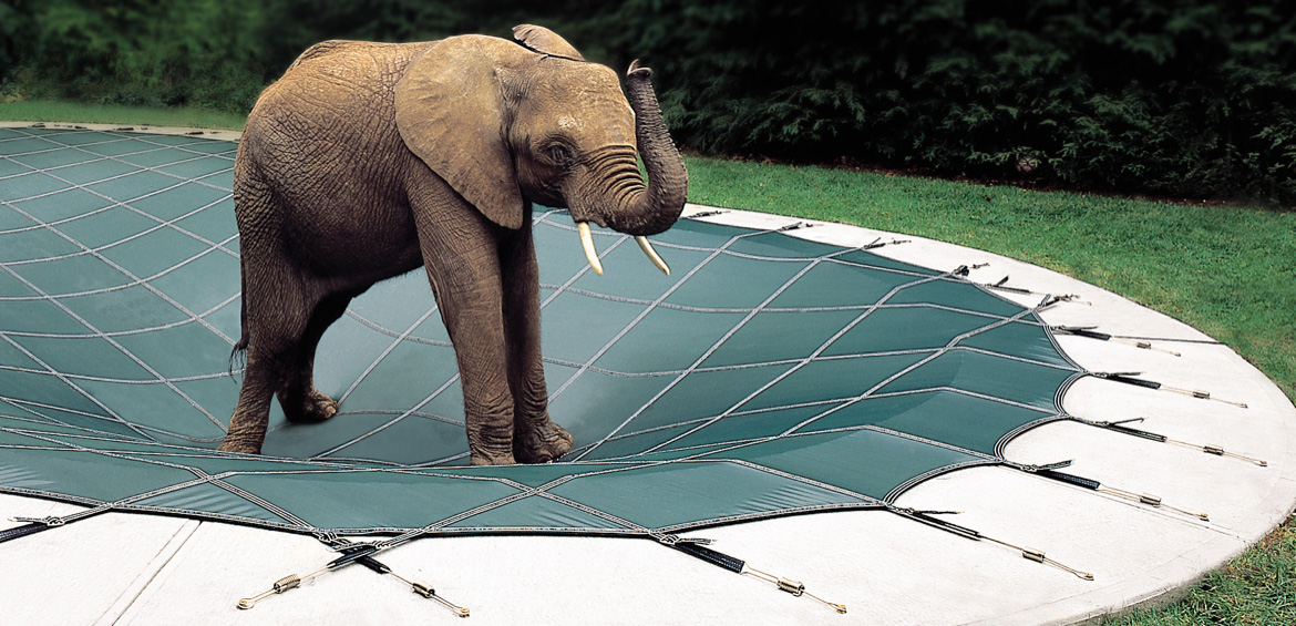 The Elephant Pool Cover